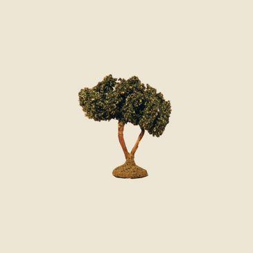 image: Olive Tree 6 cm