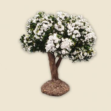 Tree with white flowers