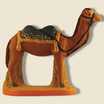 Camel with bleue blanket