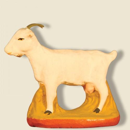 image: Chèvre blanche